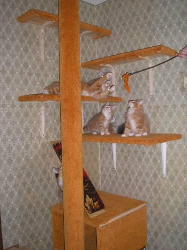 Уголок для кошек своими руками